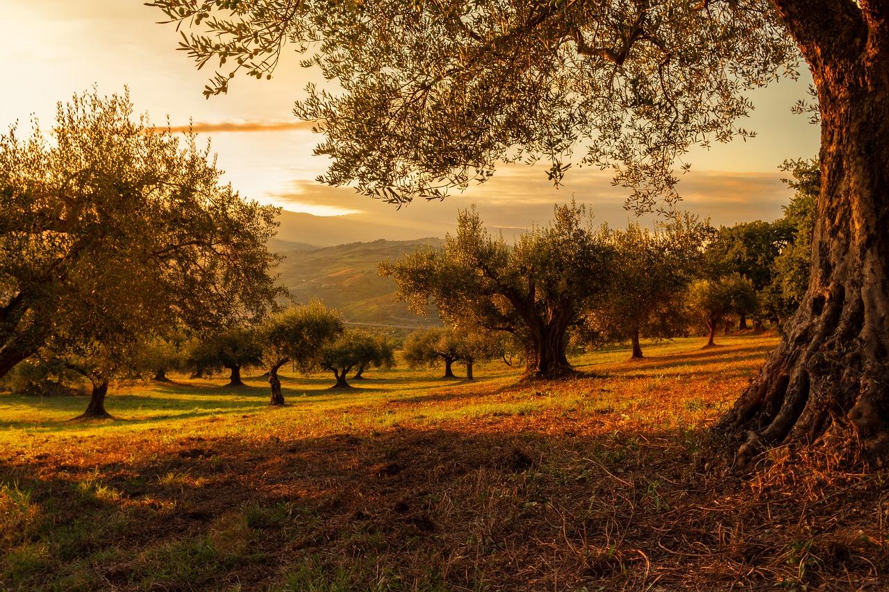 Priorités du déconfinement : prendre soin des espaces verts